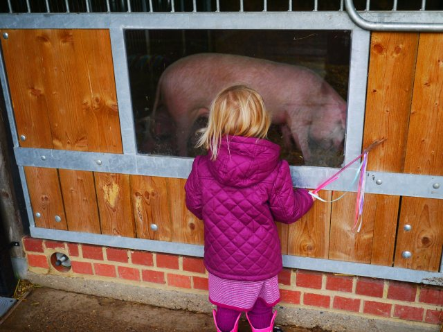 halloween at lee valley park farms