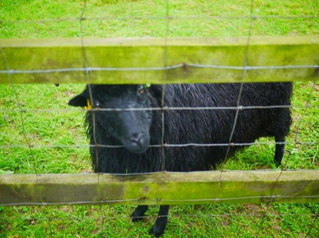 http://littlestarandme.com/2014/09/12/an-afternoon-at-lee-valley-park-farms/