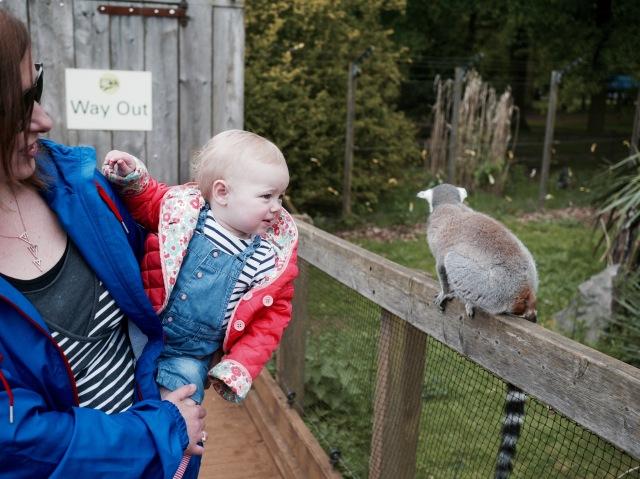 ZSL whispsnade zoo lemurs