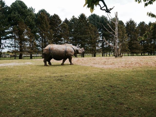 ZSL whipsnade zoo rhino