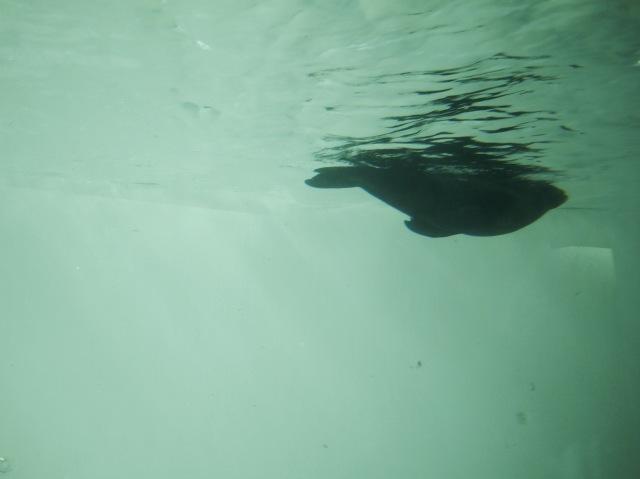 ZSL whipsnade zoo sea lion